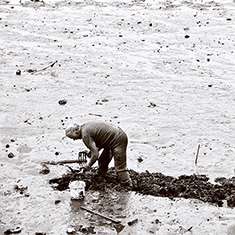 Clam Digging, Salem, Massachusetts